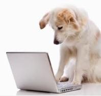 dog sufing web